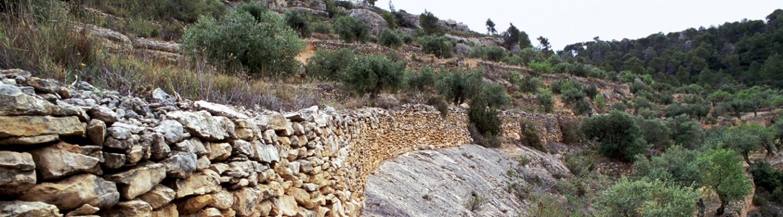 paisatge_agrari_xavi_vaque