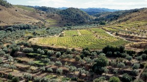 paisatge_agrari_2_xavi_vaque